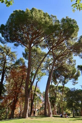 El Retiro park in Madrid.