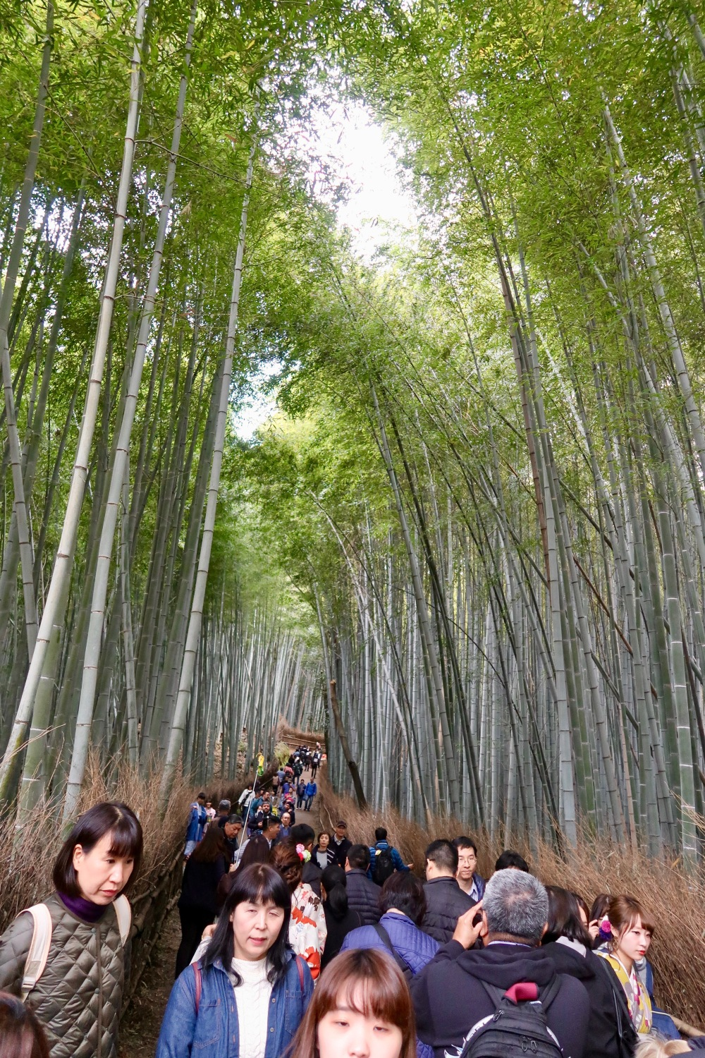 A river of people run through the Bamboo Forest