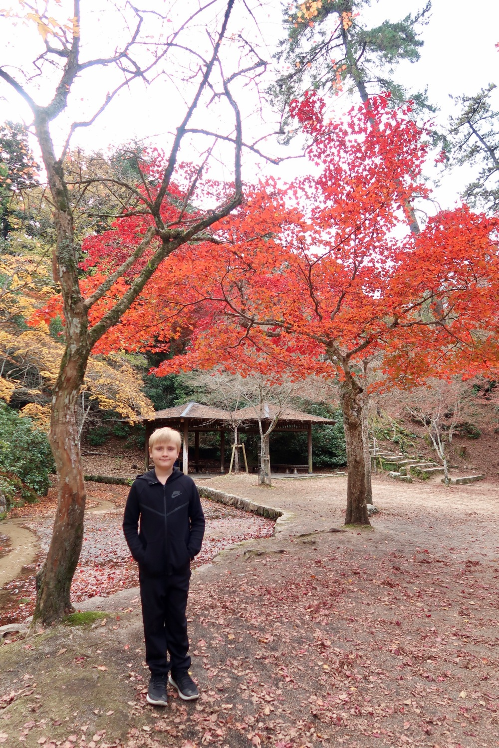 Boy in Black with Red Maple