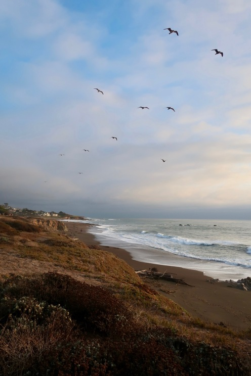 Cambria beach walk