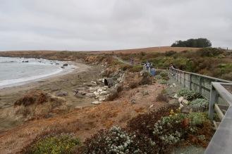 Elephant Seal colony