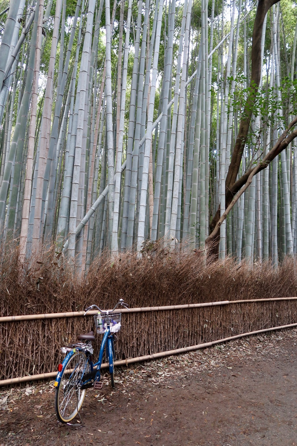Lonely bike and bamboo. Not for long. I wonder how I managed to take this pic