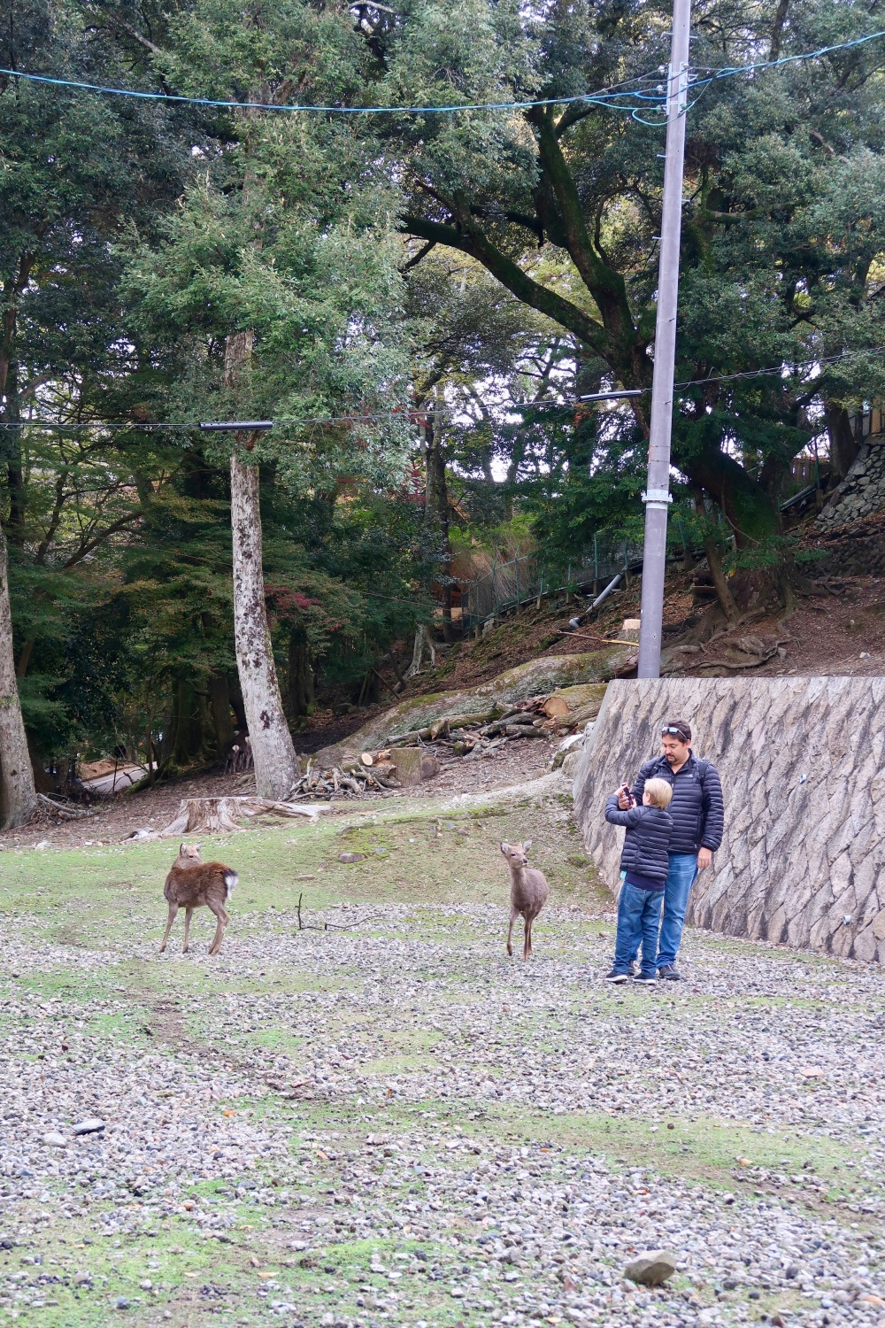 These two weren't interacting with these deer, but playing pokemon-go, which is quite good for being informed about all the historical sites